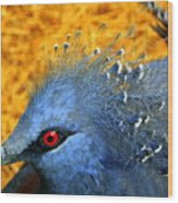 Victoria Crowned Pigeon Close Up Wood Print