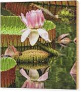 Victoria Cruziana Waterlily Wood Print