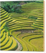 Vietnam Rice Terraces Wood Print