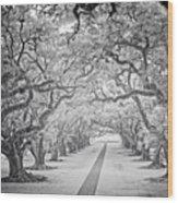 View Down Oak Alley Wood Print