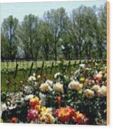 View From Bridlewood Vineyards Wood Print