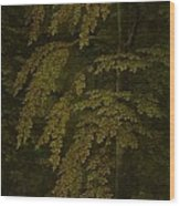 View In A Forest  Outer Right Wing Of A Triptych  Gerard David  C  1505   C  1515 Wood Print