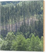 View Of The Mixed Forest Wood Print