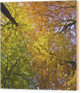 View To The Top Of Beech Trees Wood Print