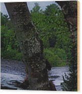 Viewing Tahquamenon Lower Falls Upper Peninsula Michigan Panorama 02 Wood Print