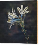 Vignetted Ajo Lily Wood Print