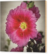 Vignetted Hollyhock Wood Print