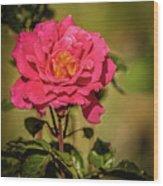 Vignetted  Rose Wood Print