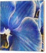 Vincent's Orchid Wood Print