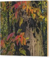 Vine And Hickory Wood Print