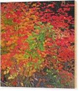 Vine Maple In Oregon Wood Print