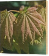 Vine Maple Leaves Wood Print