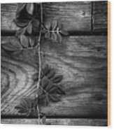 Vine On Barn Wood Print