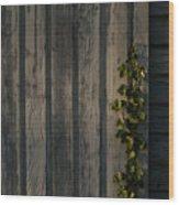 Vine On Wood Wood Print