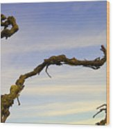 Vineland Series IIi Wood Print