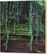 Vines Flow Over Creek Wood Print