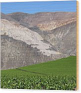 Vineyards In The Atacama Desert Chile Wood Print