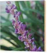 Vines Of Purple Wood Print