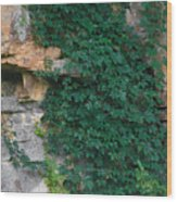 Vines On The Rocks Wood Print