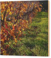 Vineyard 13 Wood Print
