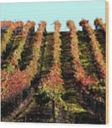 Vineyard 27 Wood Print
