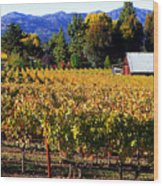 Vineyard 4 Wood Print