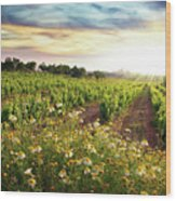 Vineyard Wood Print by Carlos Caetano