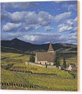 Vineyard In Alsace, France Wood Print