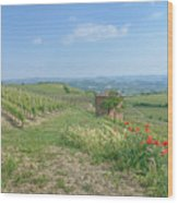 Vineyard In Italy Wood Print