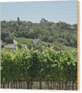 Vineyard In Sebastopol, Sonoma, California Wood Print