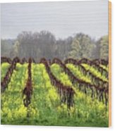 Vineyard In Westfield Wood Print