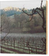 Vineyard In The Winter Wood Print