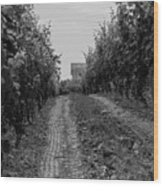 vineyard of old BW Wood Print