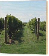 Vineyard On The Peninsula Wood Print