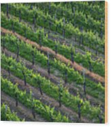 Vineyard Rows - Slovenia Wood Print