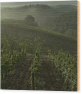 Vineyards Along The Chianti Hillside Wood Print by Todd Gipstein