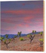 Vineyards At Sunset In Spain Wood Print