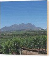 Vineyards Cape Town Wood Print
