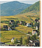 Vineyards In Autumn In The Morning Wood Print