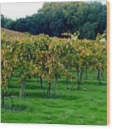 Vineyards In California Wood Print