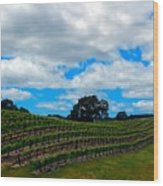 Vineyards In Paso Robles Wood Print