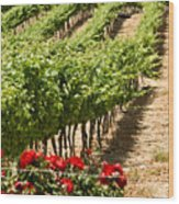 Vineyards In The Galilee  4 Wood Print