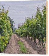 Vineyards Of Old Color Horizontal Wood Print
