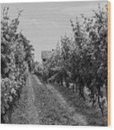 Vineyards Of Old Horizontal Bw Wood Print