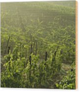Vineyards Shrouded In Fog Wood Print