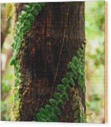 Vining Fern On Sierra Palm Tree Wood Print