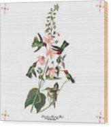 Vintage Columbian Humming Bird Audubon Wood Print