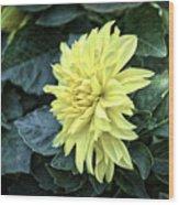 Vintage Dahlia Wood Print