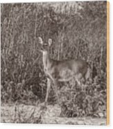 Vintage Deer Wood Print