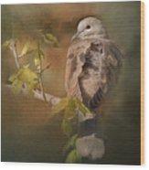Vintage Dove Wood Print